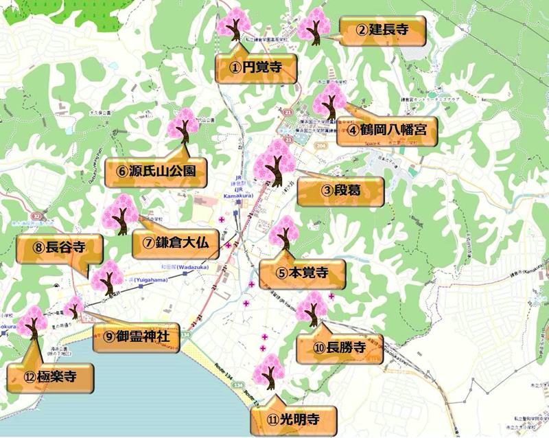 【2019年】鎌倉の桜観光スポット・かまじいのおすすめ12選と今の桜の見ごろをリアルタイム速報じゃ!